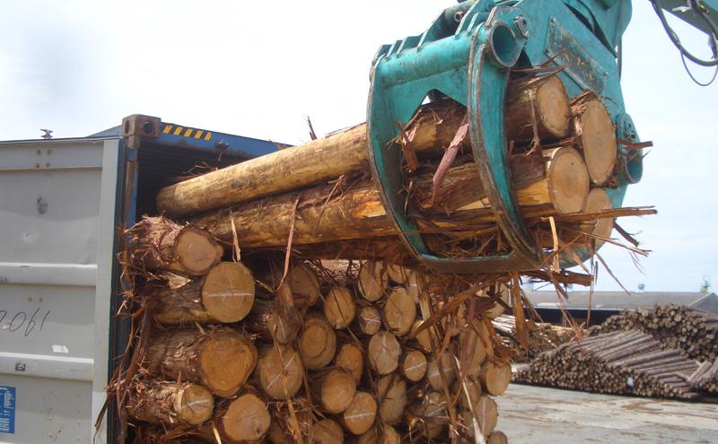 木材(国産杉材)